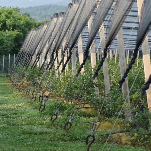 ankeri i celicna uzad protivgradnih mreza na zasadu borovnica