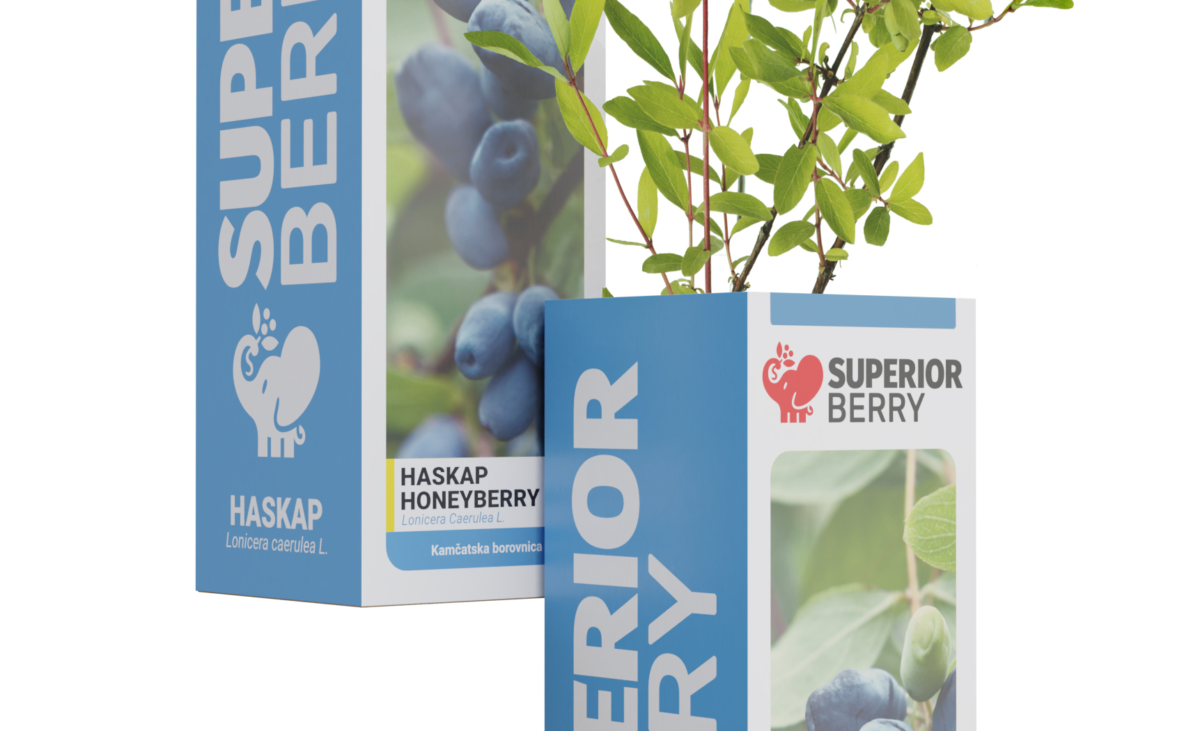 superior berry honeyberry seedling in the box