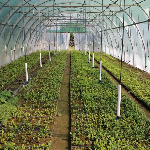 mlade biljke aklimatizacija u plasteniku