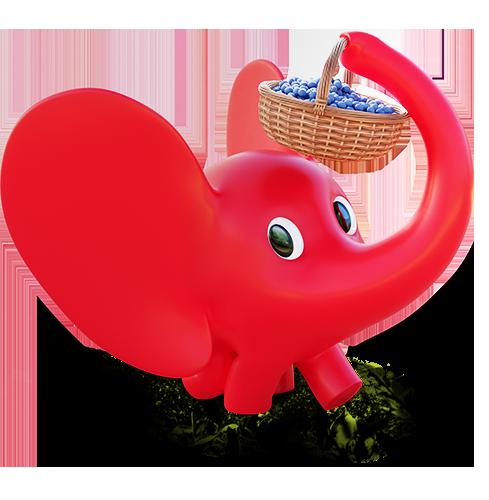 slonic uvo nosi korpu punu borovnica